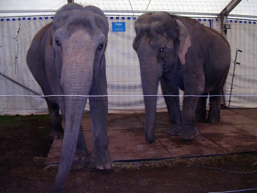 weaving circus elephants