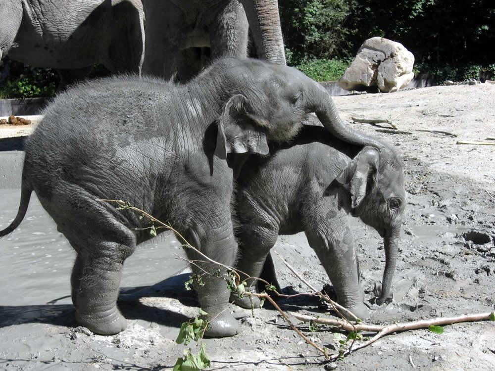 Fahara-Faim zoo Zürich