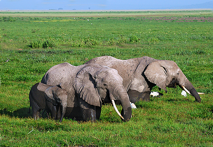 Elephants eating in a swamp area