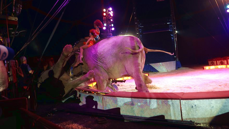 Power struggle with circus elephants