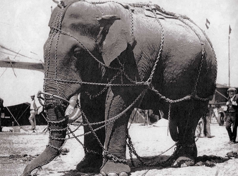 Tusko 1929 most famous elephant of America