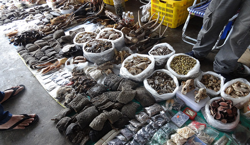 dDried elephant skin on the market