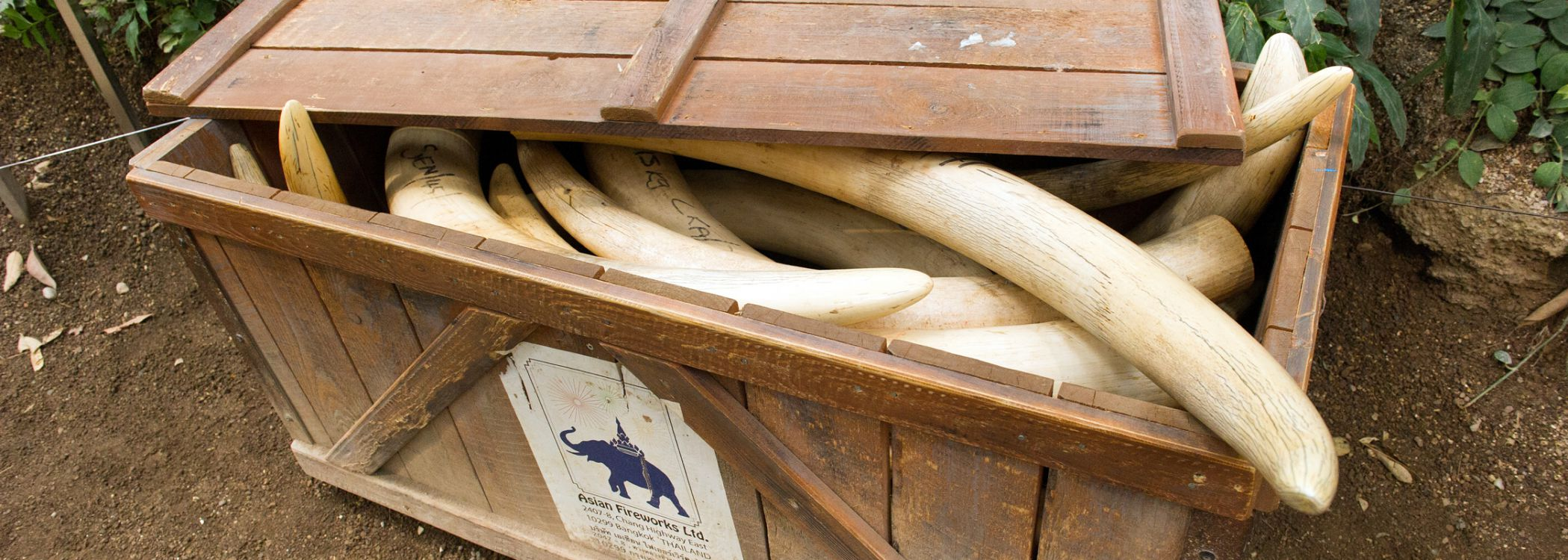 ivory smuggling