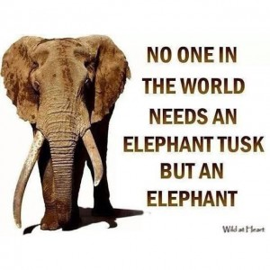 no-on-needs-a-tusk-300x300